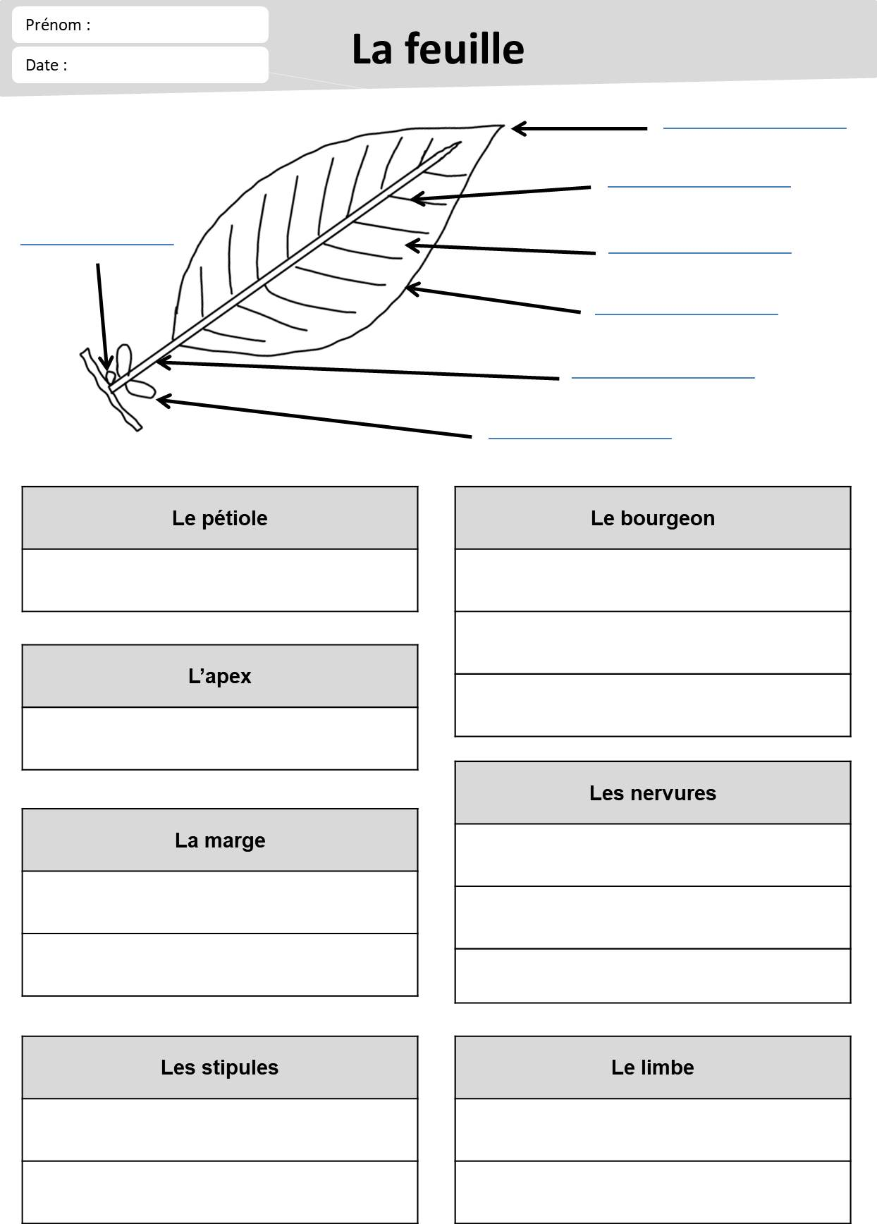 Evaluation Calendrier Ce1.Loustics Ma Classe Delementaire